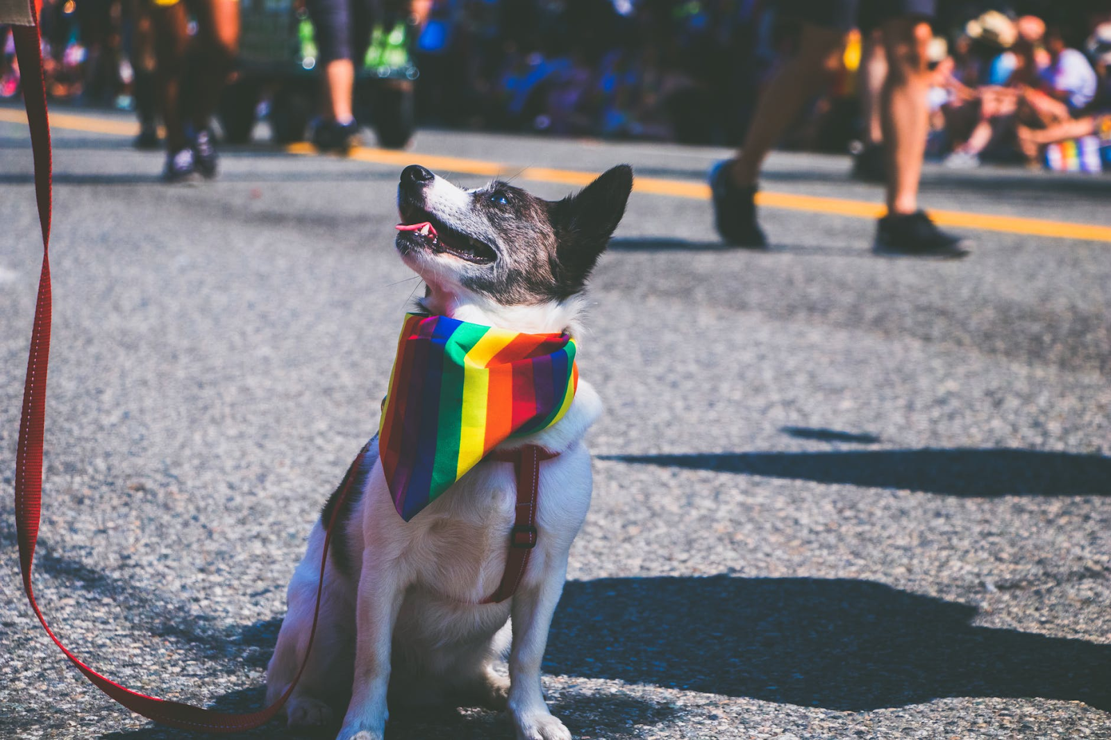 Pride in review: Good for humanity